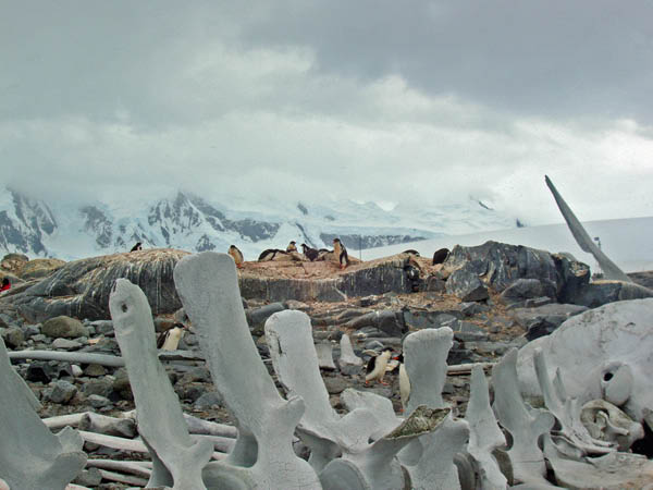 Whale skeleton at Port Lockroy